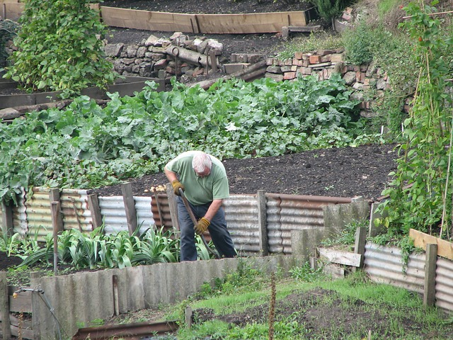 Comment avoir un beau jardin fertil?