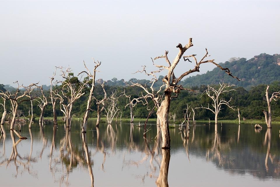 Trois activités à entreprendre lors d'un séjour au Sri Lanka