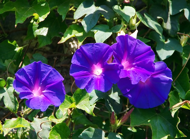 Comment jardiner naturellement ?